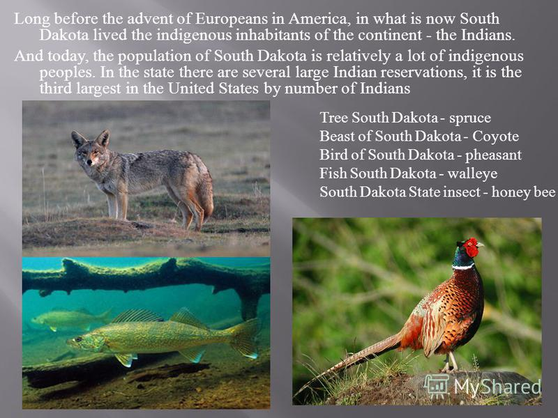 Long before the advent of Europeans in America, in what is now South Dakota lived the indigenous inhabitants of the continent - the Indians. And today, the population of South Dakota is relatively a lot of indigenous peoples. In the state there are s
