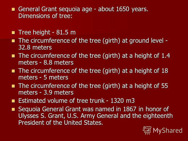 General Grant sequoia age - about 1650 years. Dimensions of tree: General Grant sequoia age - about 1650 years. Dimensions of tree: Tree height - 81.5 m Tree height - 81.5 m The circumference of the tree (girth) at ground level - 32.8 meters The circ
