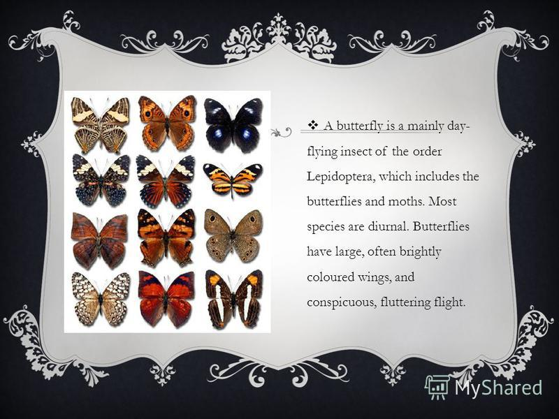A butterfly is a mainly day- flying insect of the order Lepidoptera, which includes the butterflies and moths. Most species are diurnal. Butterflies have large, often brightly coloured wings, and conspicuous, fluttering flight.