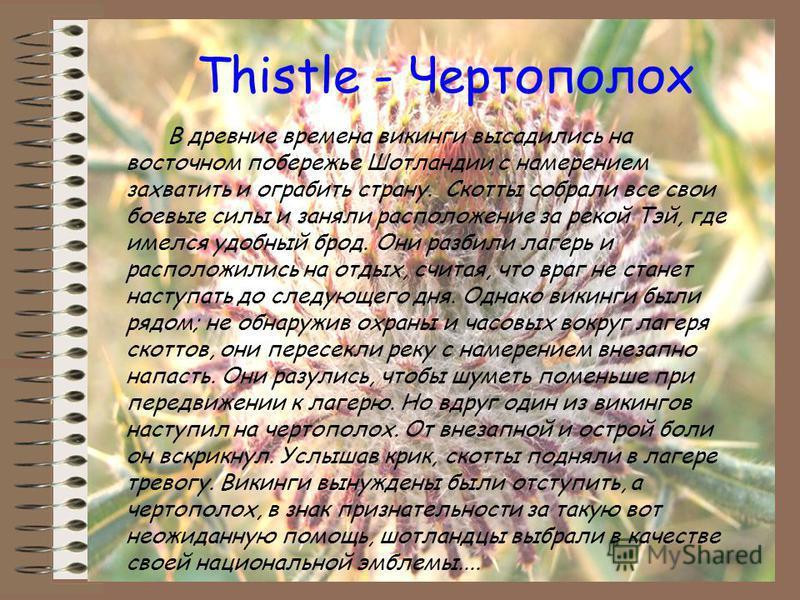 Thistle - Чертополох В древние времена викинги высадились на восточном побережье Шотландии с намерением захватить и ограбить страну. Скотты собрали все свои боевые силы и заняли расположение за рекой Тэй, где имелся удобный брод. Они разбили лагерь и