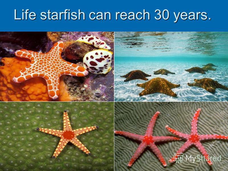 Life starfish can reach 30 years.