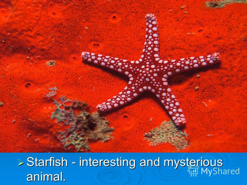 Starfish - interesting and mysterious animal. Starfish - interesting and mysterious animal.