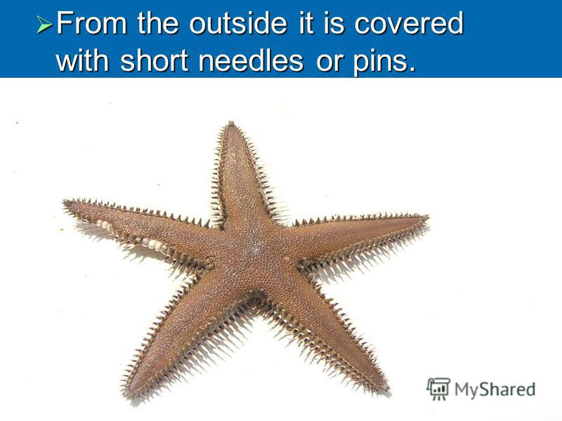 From the outside it is covered with short needles or pins. From the outside it is covered with short needles or pins.
