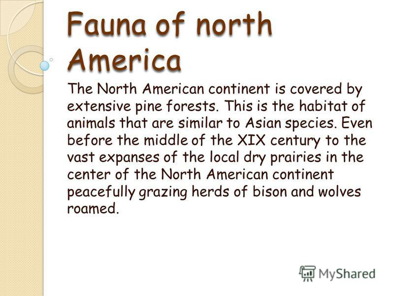 Fauna of north Аmerica The North American continent is covered by extensive pine forests. This is the habitat of animals that are similar to Asian species. Even before the middle of the XIX century to the vast expanses of the local dry prairies in th