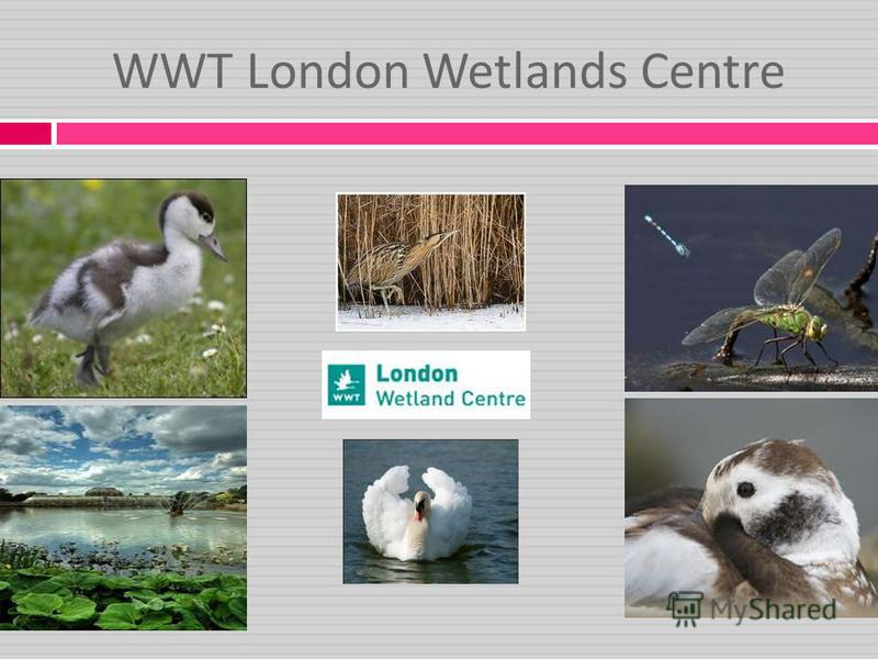 WWT London Wetlands Centre