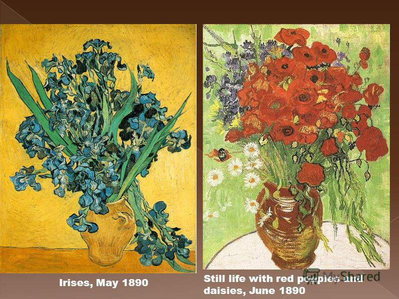 Still life with red poppies and daisies, June 1890 Irises, May 1890