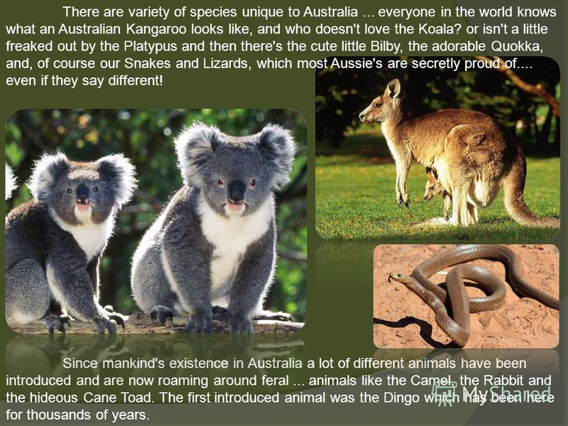 There are variety of species unique to Australia... everyone in the world knows what an Australian Kangaroo looks like, and who doesn't love the Koala? or isn't a little freaked out by the Platypus and then there's the cute little Bilby, the adorable