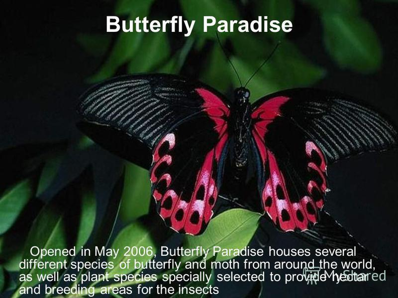 Butterfly Paradise Opened in May 2006, Butterfly Paradise houses several different species of butterfly and moth from around the world, as well as plant species specially selected to provide nectar and breeding areas for the insects