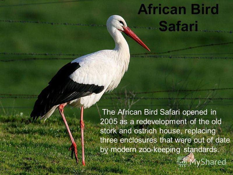 African Bird Safari The African Bird Safari opened in 2005 as a redevelopment of the old stork and ostrich house, replacing three enclosures that were out of date by modern zoo-keeping standards.