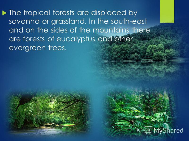 The tropical forests are displaced by savanna or grassland. In the south-east and on the sides of the mountains there are forests of eucalyptus and other evergreen trees.