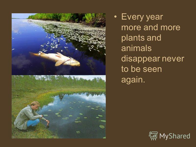 Every year more and more plants and animals disappear never to be seen again.