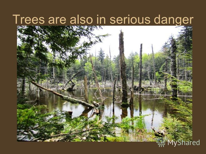 Trees are also in serious danger