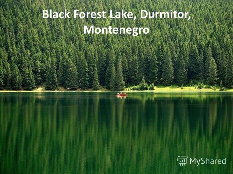 Black Forest Lake, Durmitor, Montenegro