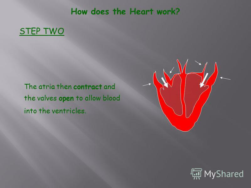 The atria then contract and the valves open to allow blood into the ventricles. How does the Heart work? STEP TWO