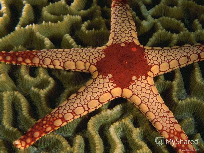 Блуждает морская звезда,