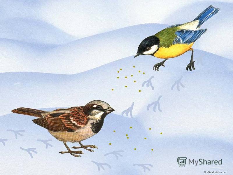 Тут вприпрыжку по странице в ясный день гуляли птицы,