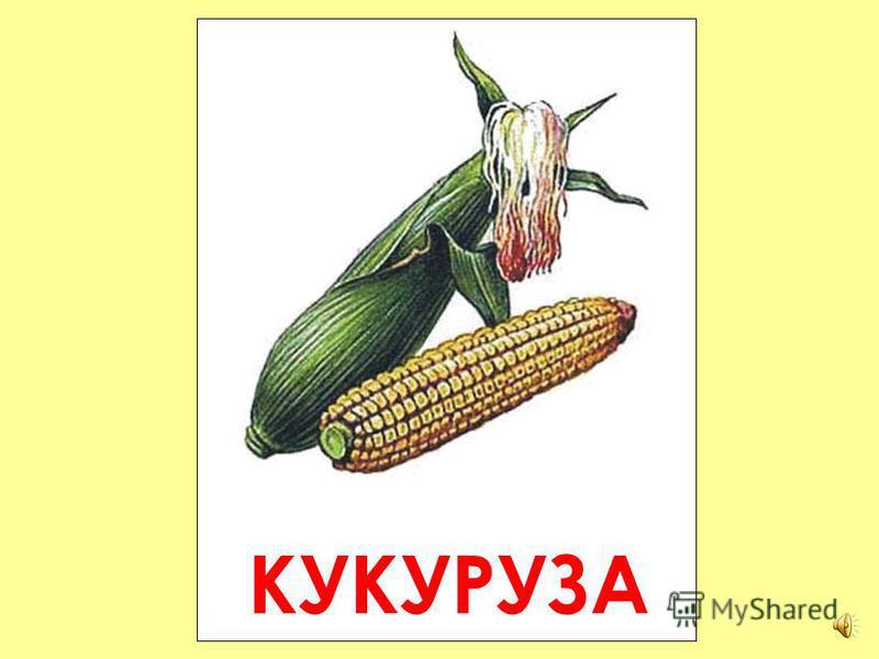 СВЁКЛА