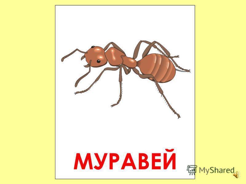 ШМЕЛЬ