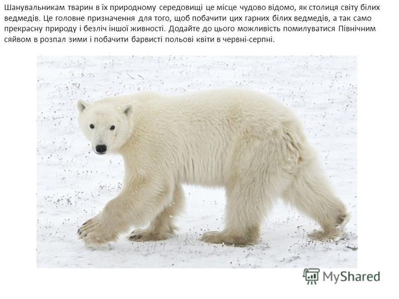 Шанувальникам тварин в їх природному середовищі це місце чудово відомо, як столиця світу білих ведмедів. Це головне призначення для того, щоб побачити цих гарних білих ведмедів, а так само прекрасну природу і безліч іншої живності. Додайте до цього м