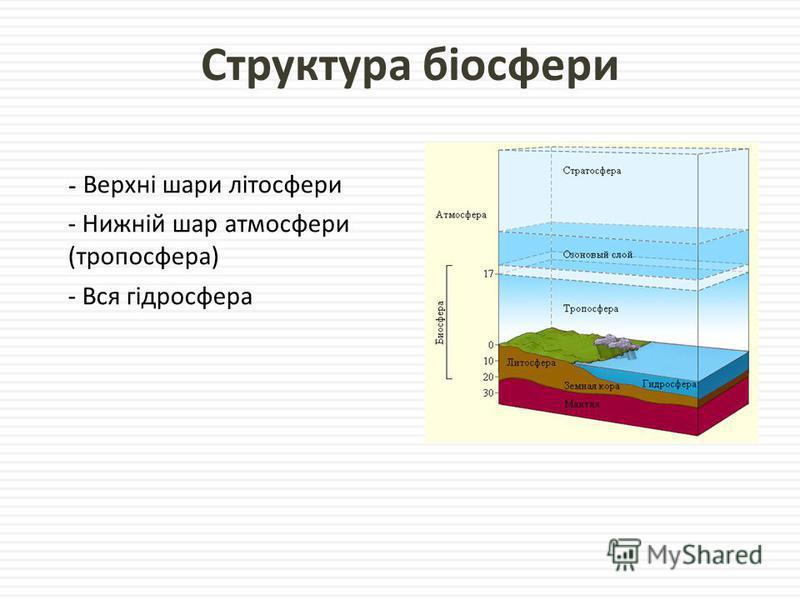 Структура біосфери - Верхні шари літосфери - Нижній шар атмосфери ( тропосфера ) - Вся гідросфера