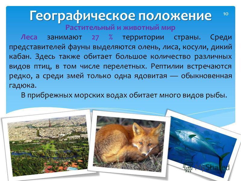 Географическое положение 10 Растительный и животный мир Леса занимают 27 % территории страны. Среди представителей фауны выделяются олень, лиса, косули, дикий кабан. Здесь также обитает большое количество различных видов птиц, в том числе перелетных.