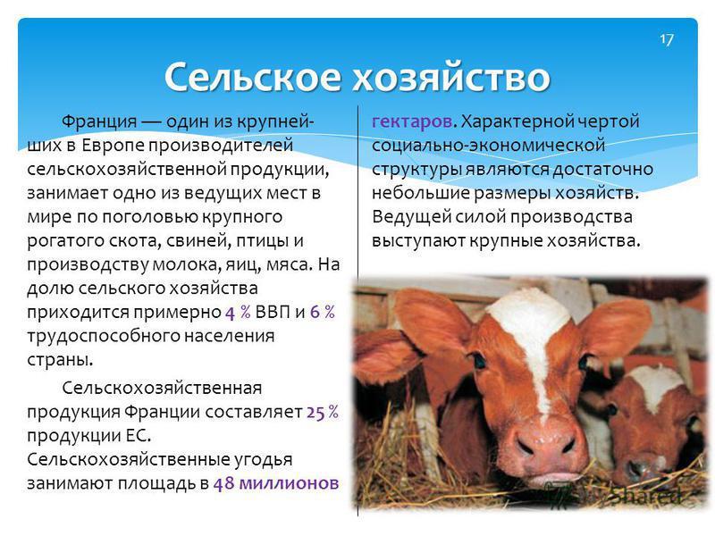 Франция один из крупнейших в Европе производителей сельскохозяйственной продукции, занимает одно из ведущих мест в мире по поголовью крупного рогатого скота, свиней, птицы и производству молока, яиц, мяса. На долю сельского хозяйства приходится приме