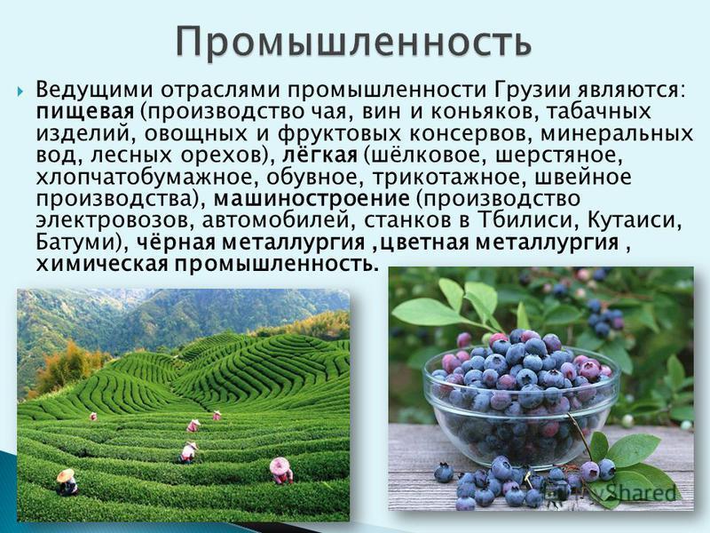 Ведущими отраслями промышленности Грузии являются: пищевая (производство чая, вин и коньяков, табачных изделий, овощных и фруктовых консервов, минеральных вод, лесных орехов), лёгкая (шёлковое, шерстяное, хлопчатобумажное, обувное, трикотажное, швейн