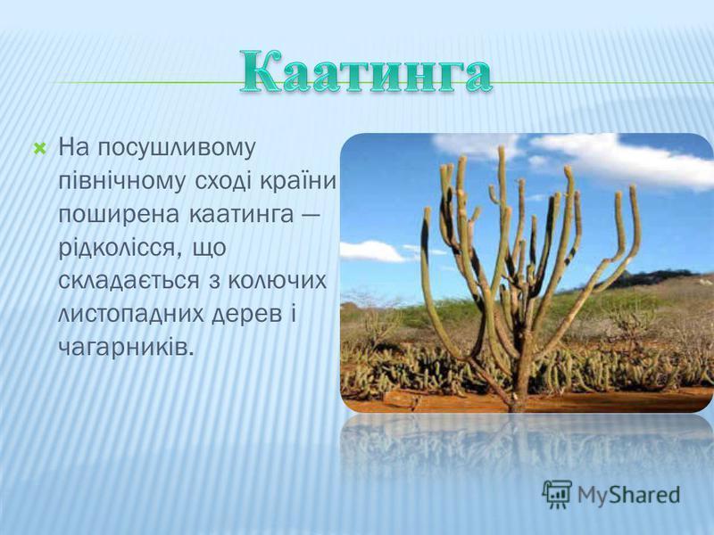 На посушливому північному сході країни поширена каатинга рідколісся, що складається з колючих листопадних дерев і чагарників.