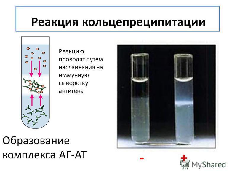 Реакция кольцепреципитации Образование комплекса АГ-АТ - + Реакцию проводят путем наслаивания на иммунную сыворотку антигена