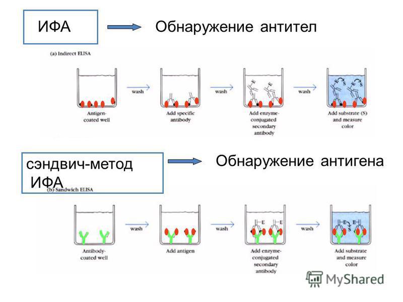 ИФА сэндвич-метод ИФА Обнаружение антител Обнаружение антигена