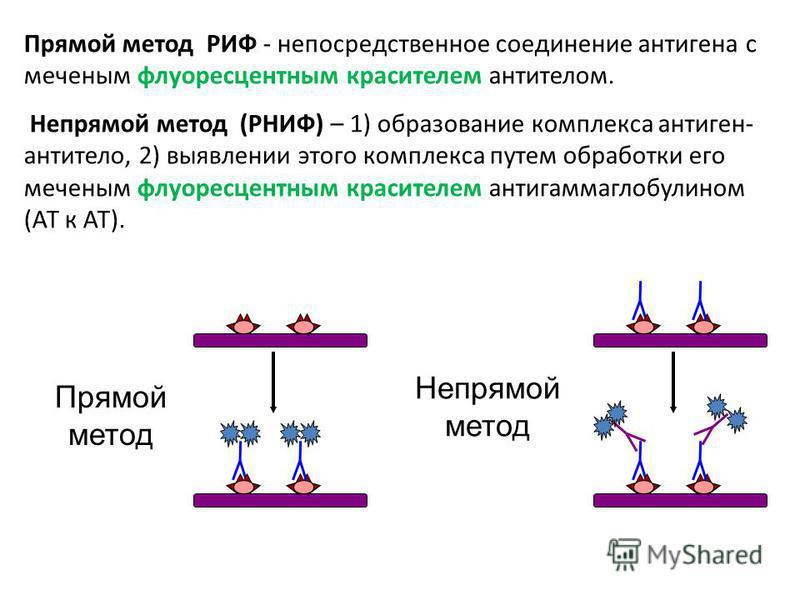 Прямой метод РИФ - непосредственное соединение антигена с меченым флуоресцентным красителем антителом. Непрямой метод (РНИФ) – 1) образование комплекса антиген- антитело, 2) выявлении этого комплекса путем обработки его меченым флуоресцентным красите