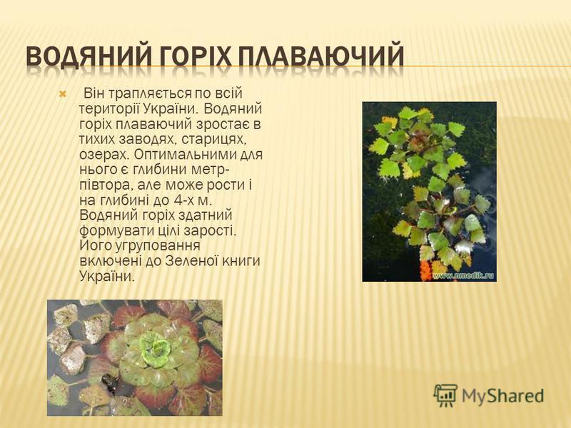 Він трапляється по всій території України. Водяний горіх плаваючий зростає в тихих заводях, старицях, озерах. Оптимальними для нього є глибини метр- півтора, але може рости і на глибині до 4-х м. Водяний горіх здатний формувати цілі зарості. Його угр