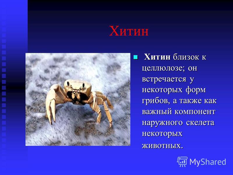 Хитин Хитин близок к целлюлозе; он встречается у некоторых форм грибов, а также как важный компонент наружного скелета некоторых животных.