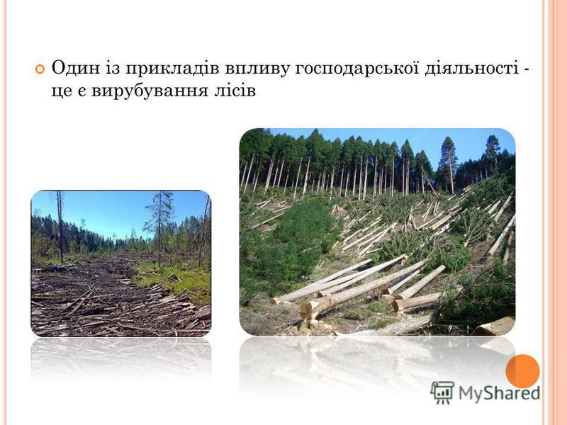 Один із прикладів впливу господарської діяльності - це є вирубування лісів