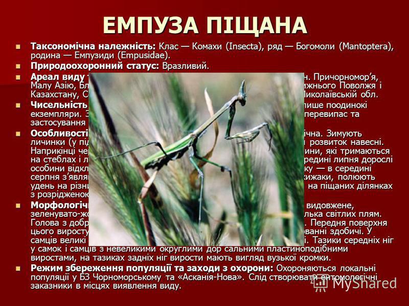 ЕМПУЗА ПІЩАНА Таксономічна належність: Клас Комахи (Insecta), ряд Богомоли (Mantoptera), родина Емпузиди (Empusidae). Таксономічна належність: Клас Комахи (Insecta), ряд Богомоли (Mantoptera), родина Емпузиди (Empusidae). Природоохоронний статус: Вра