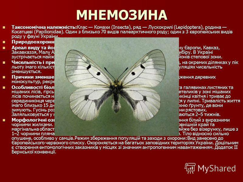 МНЕМОЗИНА Таксономічна належність:Клас Комахи (Insecta), ряд Лускокрилі (Lepidoptera), родина Косатцеві (Papilionidae). Один з близько 70 видів палеарктичного роду; один з 3 європейських видів роду у фауні України. Таксономічна належність:Клас Комахи