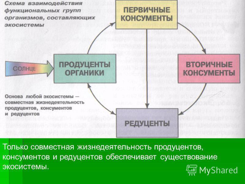 Только совместная жизнедеятельность продуцентов, консументов и редуцентов обеспечивает существование экосистемы.