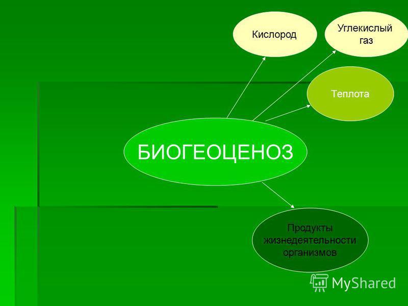 БИОГЕОЦЕНОЗ Теплота Кислород Углекислый газ Продукты жизнедеятельности организмов