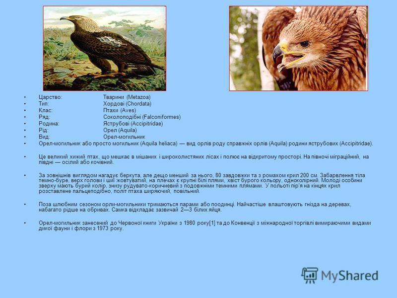 Царство:Тварини (Metazoa) Тип:Хордові (Chordata) Клас:Птахи (Aves) Ряд:Соколоподібні (Falconiformes) Родина:Яструбові (Accipitridae) Рід:Орел (Aquila) Вид:Орел-могильник Орел-могильник або просто могильник (Aquila heliaca) вид орлів роду справжніх ор