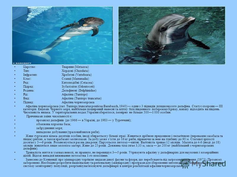 Царство:Тварини (Metazoa) Тип:Хордові (Chordata) Інфратип:Хребетні (Vertebrata) Клас:Ссавці (Mammalia) Ряд:Китоподібні (Cetacea) Підряд:Зубаті кіти (Odontoceti) Родина:Дельфінові (Delphinidae) Рід:Афаліна (Tursiops) Вид:Афаліна (Tursiops truncatus) П