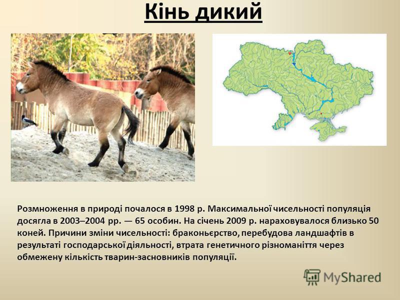 Кінь дикий Розмноження в природі почалося в 1998 р. Максимальної чисельності популяція досягла в 2003–2004 рр. 65 особин. На січень 2009 р. нараховувалося близько 50 коней. Причини зміни чисельності: браконьєрство, перебудова ландшафтів в результаті