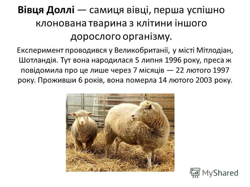 Вівця Доллі самиця вівці, перша успішно клонована тварина з клітини іншого дорослого організму. Експеримент проводився у Великобританії, у місті Мітлодіан, Шотландія. Тут вона народилася 5 липня 1996 року, преса ж повідомила про це лише через 7 місяц