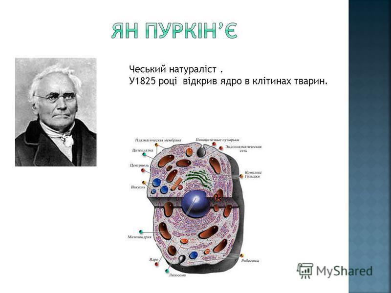 Чеський натураліст. У1825 році відкрив ядро в клітинах тварин.