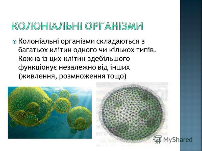 Колоніальні організми складаються з багатьох клітин одного чи кількох типів. Кожна із цих клітин здебільшого функціонує незалежно від інших (живлення, розмноження тощо)