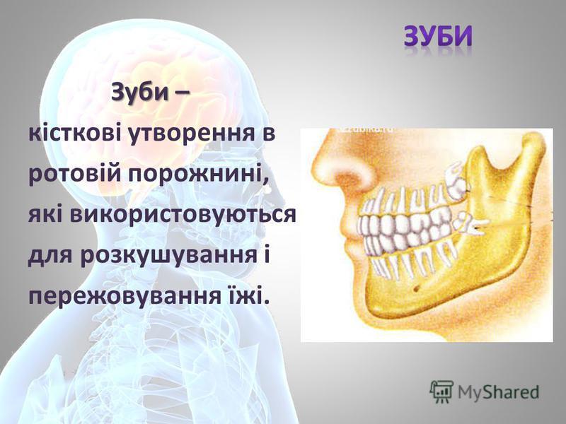 Зуби – Зуби – кісткові утворення в ротовій порожнині, які використовуються для розкушування і пережовування їжі.
