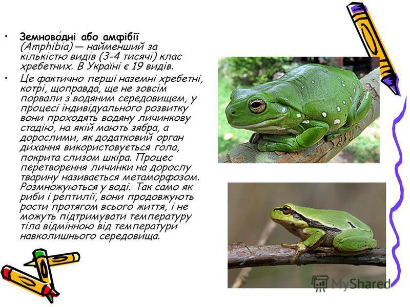 Земноводні або амфібії (Amphibia) найменший за кількістю видів (3-4 тисячі) клас хребетних. В Україні є 19 видів. Це фактично перші наземні хребетні, котрі, щоправда, ще не зовсім порвали з водяним середовищем, у процесі індивідуального розвитку вони