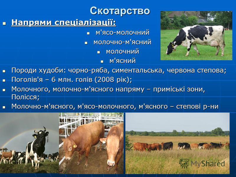 Скотарство Напрями спеціалізації: Напрями спеціалізації: м'ясо-молочний м'ясо-молочний молочно-м'ясний молочно-м'ясний молочний молочний м'ясний м'ясний Породи худоби: чорно-ряба, симентальська, червона степова; Породи худоби: чорно-ряба, симентальсь