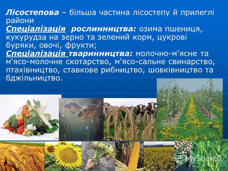 Лісостепова – більша частина лісостепу й прилеглі райони Спеціалізація рослинництва: озима пшениця, кукурудза на зерно та зелений корм, цукрові буряки, овочі, фрукти; Спеціалізація тваринництва: молочно-м'ясне та м'ясо-молочне скотарство, м'ясо-сальн