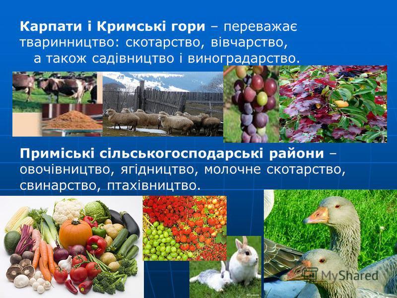 Карпати і Кримські гори – переважає тваринництво: скотарство, вівчарство, а також садівництво і виноградарство. Приміські сільськогосподарські райони – овочівництво, ягідництво, молочне скотарство, свинарство, птахівництво.