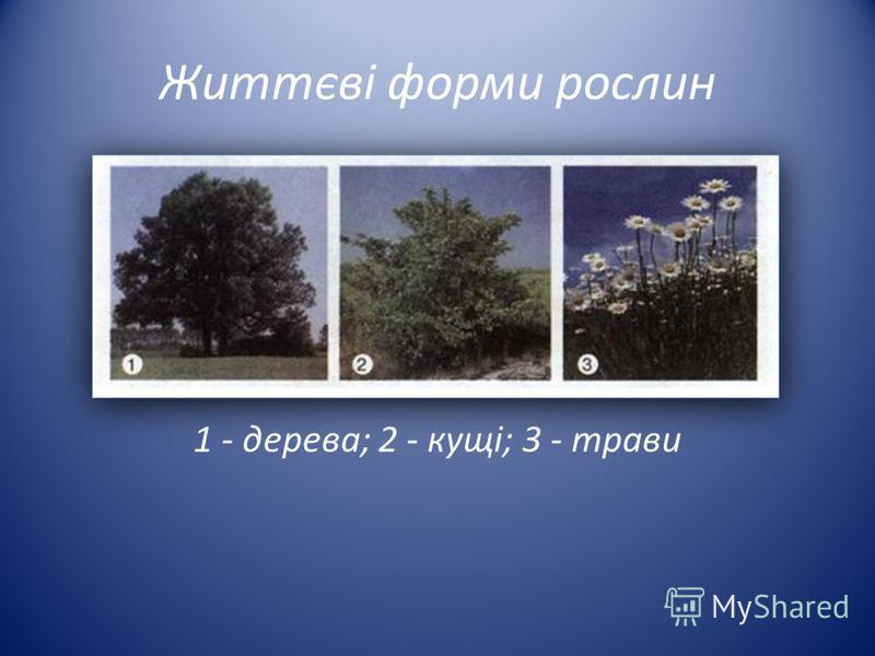 Життєві форми рослин 1 - дерева; 2 - кущі; 3 - трави